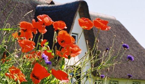 Haus und Mohnblumen